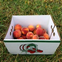Peach9