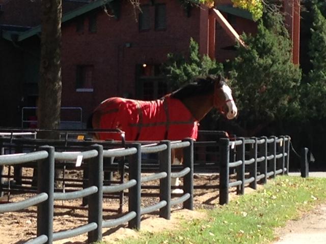 HorseatBrewery