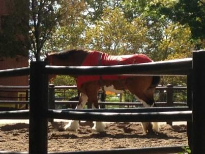 Horseatbrewery2